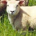 la-ferme-du-mouton